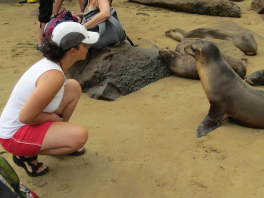 One could get very close to the Sea Lions
