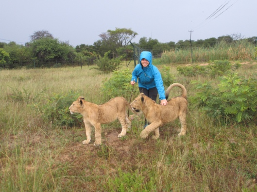 Walking with Lions at Antelope Park