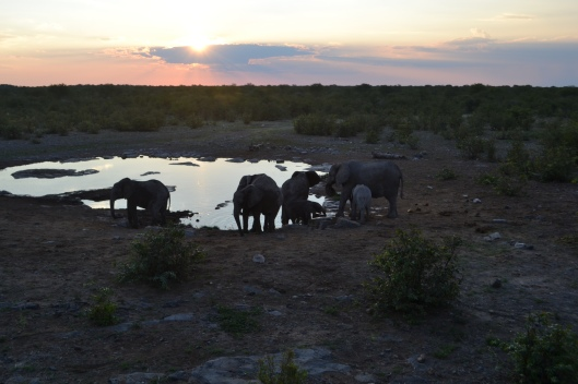 Elephants at the Watering Hole (someone else's pic!)