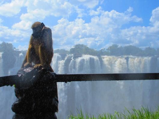Baboon at the falls