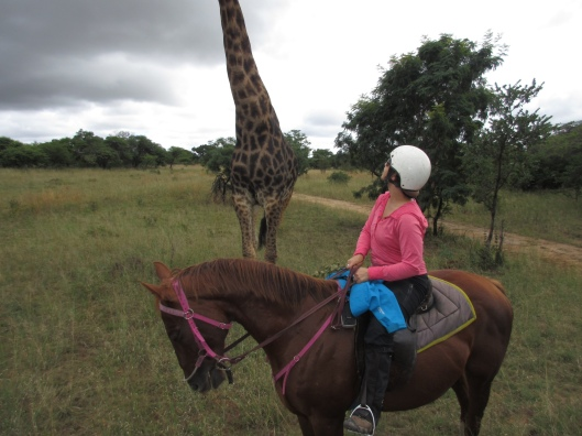 checking out a giraffe on my horseback safari