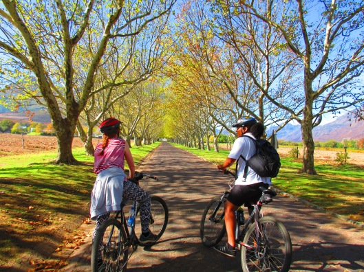 Heading out on our bike tour of Stellenbosch