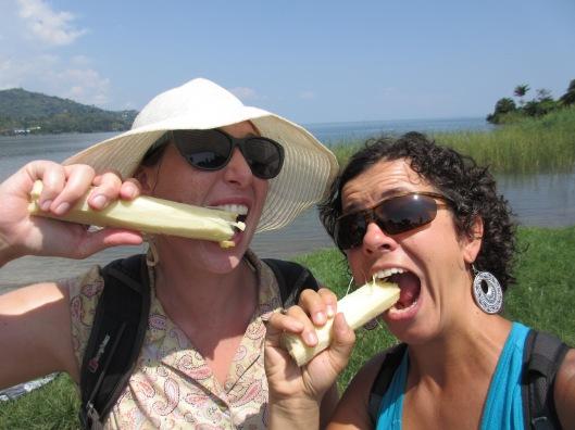 Eating Sugar cane